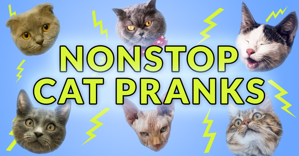 Non-Stop Cats Phone Prank